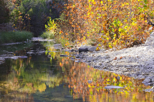 Lost River State Park Wall Art - Photograph - Fiery Reflection At Lost Maples by Debbie Karnes