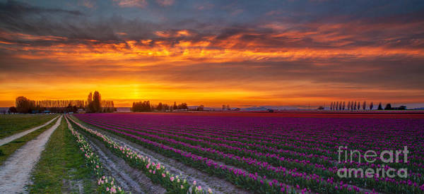 Wall Art - Photograph - Fiery Skies Above Broad Tulips by Mike Reid