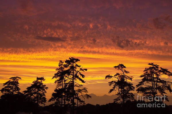 Photograph - Fiery Sunset by Rima Biswas