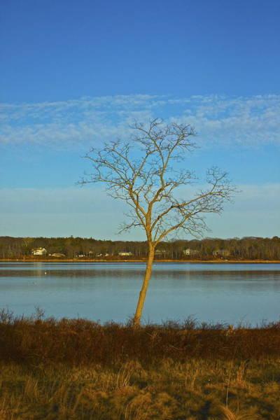 Photograph - Fiery Tree  by Amazing Jules