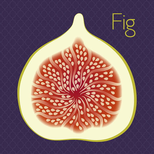 Fruit Wall Art - Digital Art - Fig by Christy Beckwith