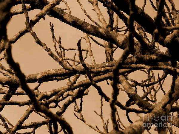 Photograph - Fig Tree by Andrea Anderegg
