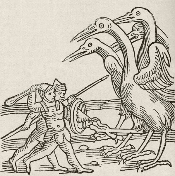 Imagination Drawing - Fight Between Pygmies And Cranes. A Story From Greek Mythology by English School