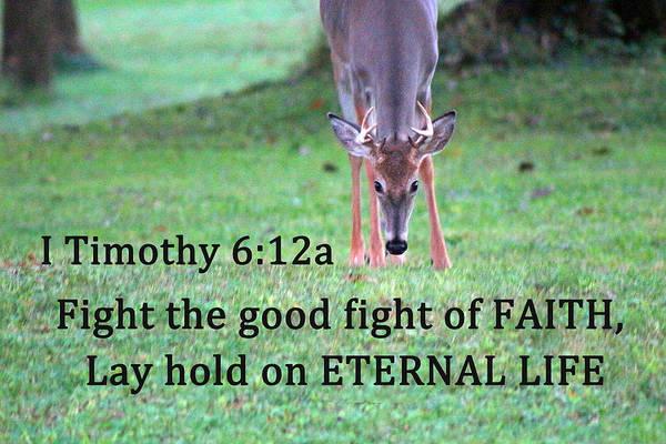Photograph - Fight Of Faith by Lorna R Mills DBA  Lorna Rogers Photography