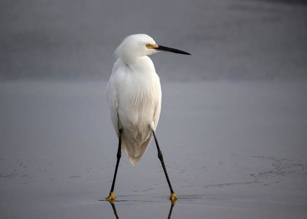 Egret Photograph - Fighter by Hao Jiang