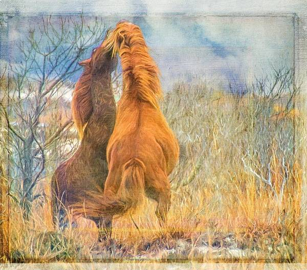 Photograph - Fighting Stallions by Alice Gipson