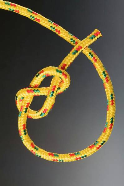 Knot Photograph - Figure Of Eight Knot by Steve Percival/science Photo Library