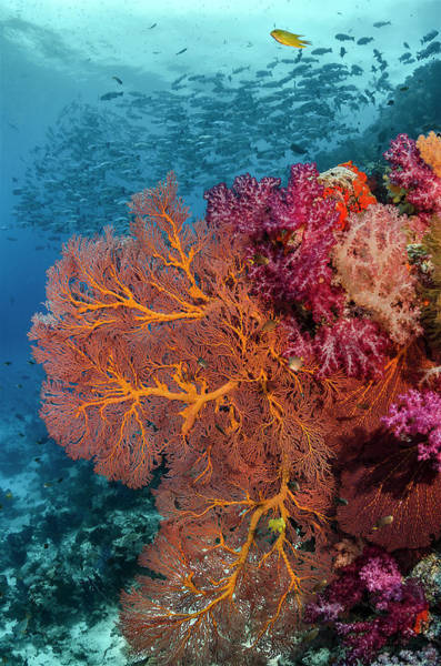 Wall Art - Photograph - Fiji Fish And Coral Reef by Jaynes Gallery