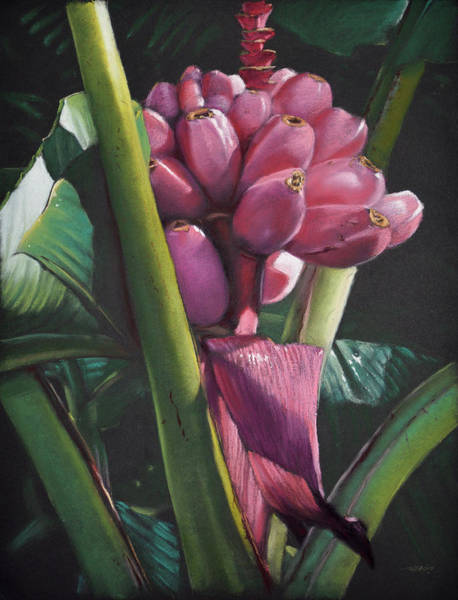 Painting - Fijian Bananas by Christopher Reid
