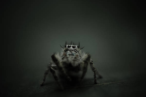Filbert The Jumping Spider Art Print