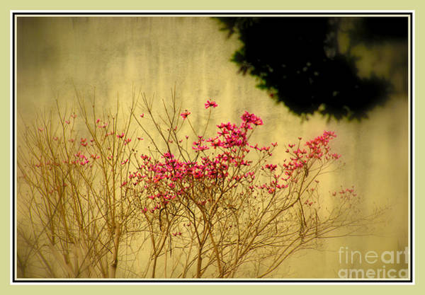 Photograph - Filigree 3 In A Frame by Susanne Van Hulst