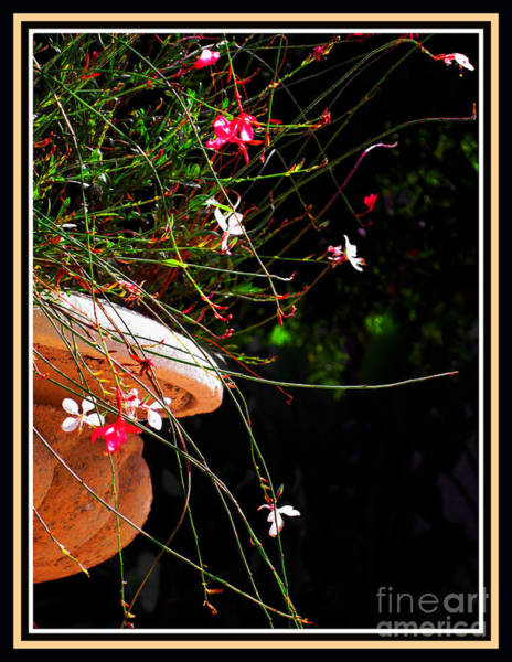 Photograph - Filigree 4 In A Frame by Susanne Van Hulst