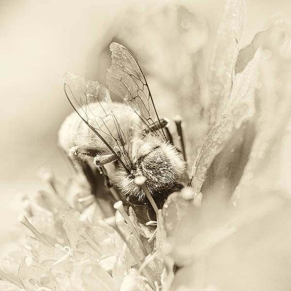 Pollination Photograph - Filigree by Caitlyn  Grasso