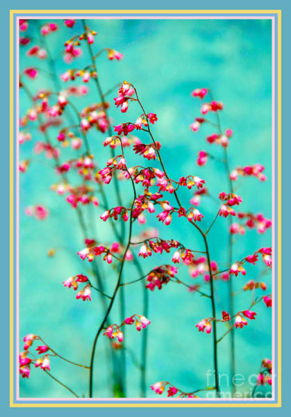 Photograph - Filigree In A Frame by Susanne Van Hulst