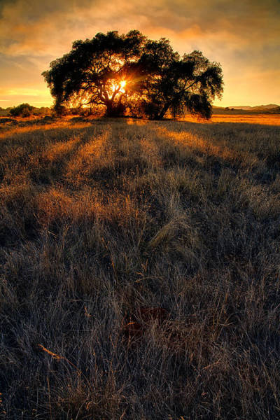 Prarie Photograph - Filtered by Peter Tellone