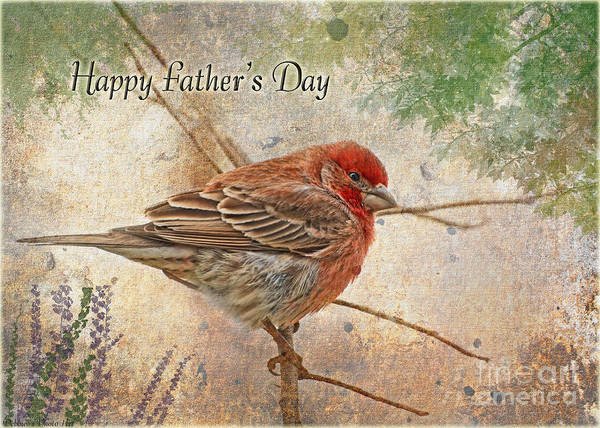 Wall Art - Photograph - Finch Greeting Card Father's Day by Debbie Portwood