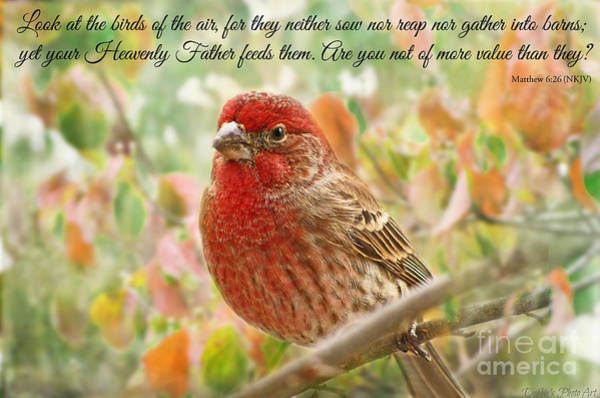 Wall Art - Photograph - Finch With Verse New Version by Debbie Portwood