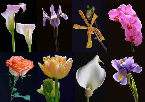 Photograph - Fine Art Flower Photography by Juergen Roth