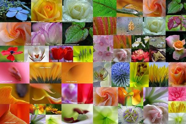 Photograph - Fine Arts In Bloom by Juergen Roth