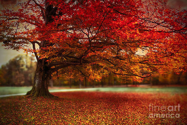 Photograph - Finest Fall by Hannes Cmarits