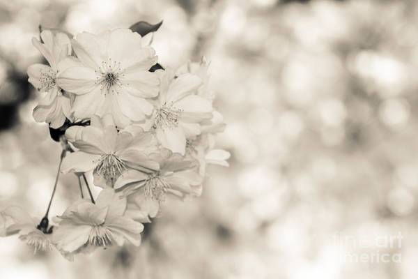 Photograph - Finest Spring Time - Bw by Hannes Cmarits