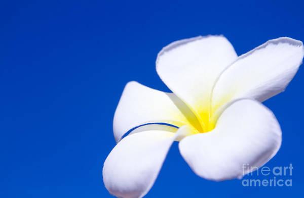 Photograph - Fiore Nel Cielo - The Blue Dream Of Sky by Sharon Mau