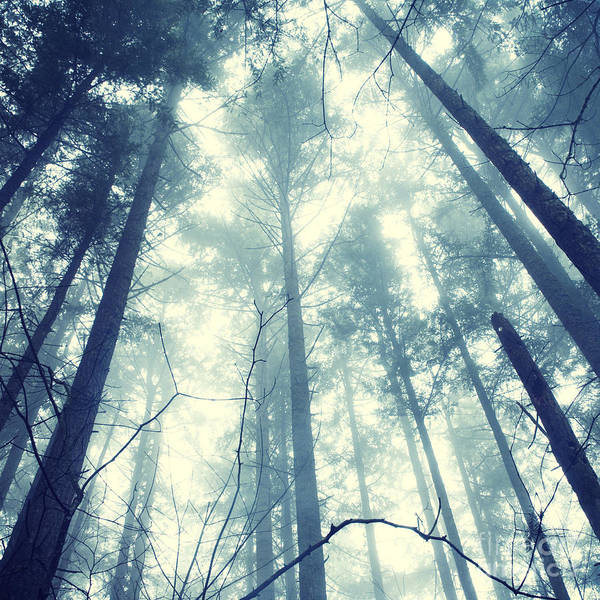 Photograph - Fir Forest Fog - Hipster Photo Square by Charmian Vistaunet