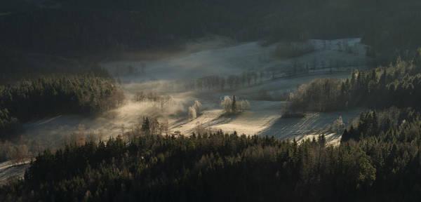 Pine Photograph - Fire And Ice II by Izabela Laszewska-mitrega/darek Mitr?ga