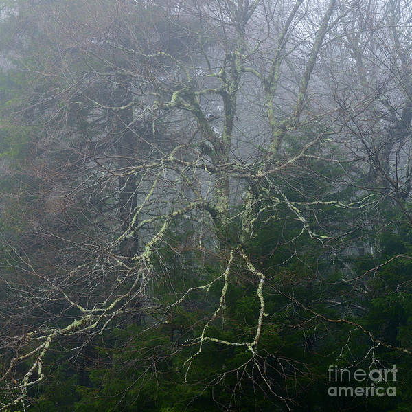 Photograph - Fire Cherry In Mist by Thomas R Fletcher
