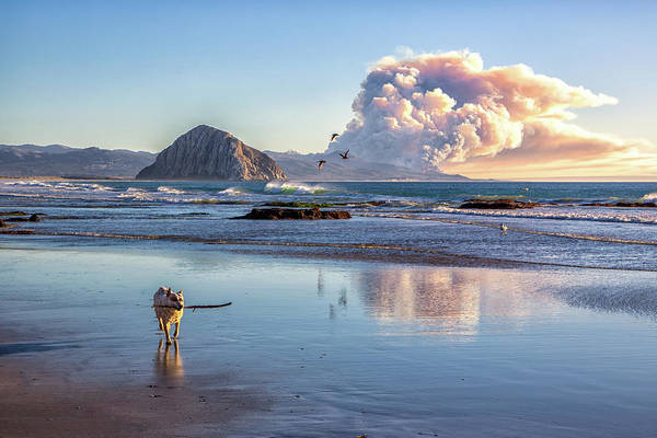 Montana De Oro State Park Photograph - Fire In The Distance by Mimi Ditchie Photography