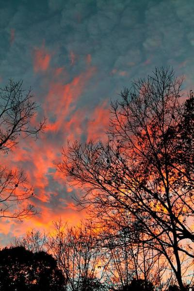 Photograph - Fire In The Sky by Candice Trimble