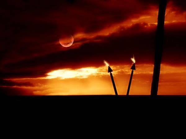 Photograph - Fire Light by Micki Findlay