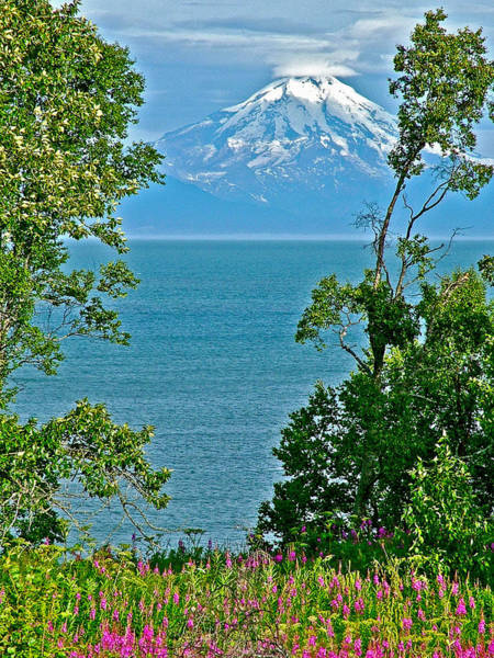 Mount Redoubt Photograph - Fireweed And Mount Redoubt Across Cook Inlet From Ninilchik-alaska  by Ruth Hager