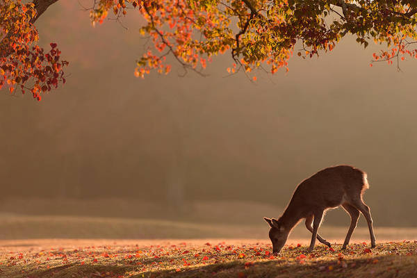 Nara Wall Art - Photograph - First Autumn by Yoshinori Matsui