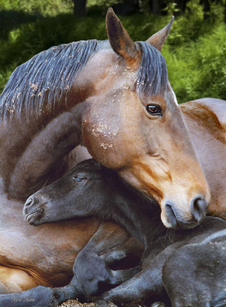 Mare And Foal Photograph - First Born by Diane C Nicholson