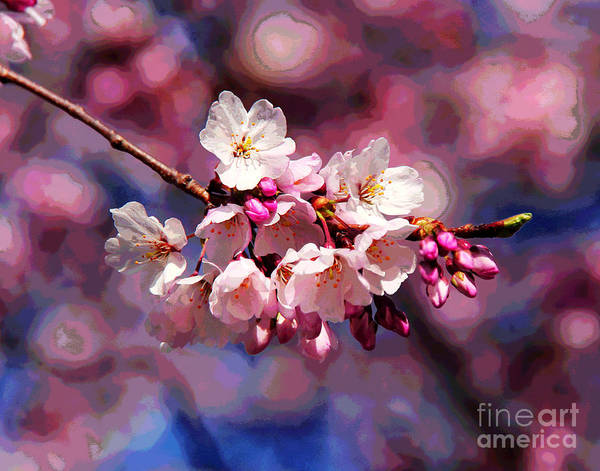 Photograph - First Cherry Blossoms by Larry Oskin