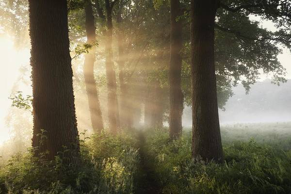 Sunbeam Photograph - First Day Of Summer by Vincent Croce