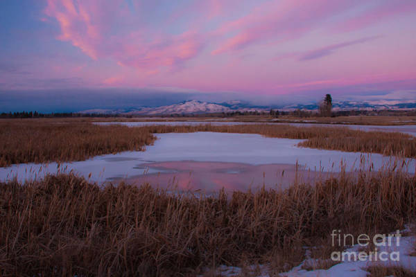 Photograph - First Evening 2013 by Katie LaSalle-Lowery
