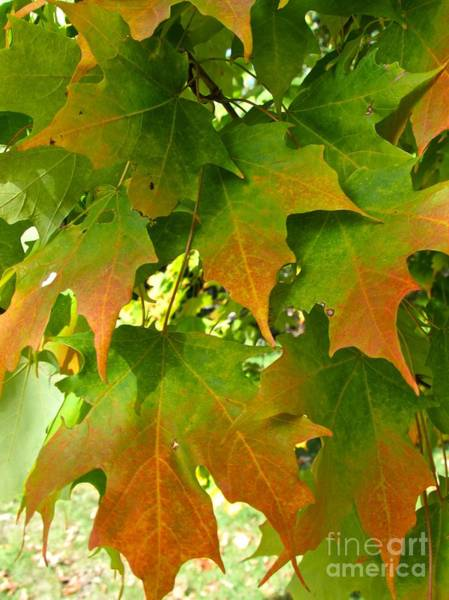 Photograph - First Fall by Pamela Clements