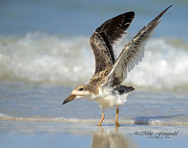 Photograph - First Flight by Mike Fitzgerald