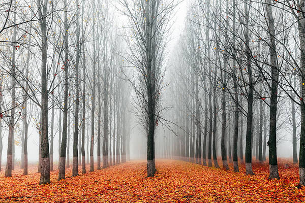 Wall Art - Photograph - First In The Line by Evgeni Dinev
