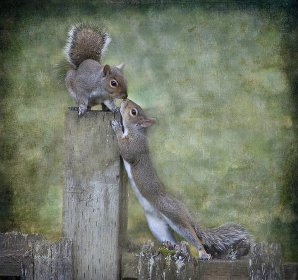 Wall Art - Photograph - First Kiss by Angie Vogel