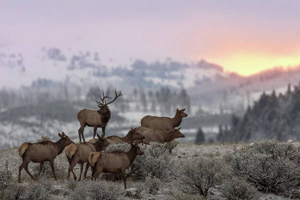 Reindeer Wall Art - Photograph - First Light by Nick Kalathas