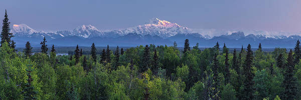 First Light On The South Side Of Denali Art Print