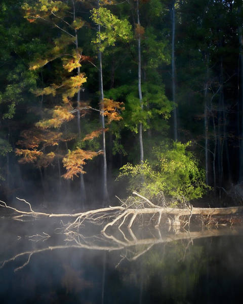 Bald Cypress Photograph - First Light by Lana Trussell