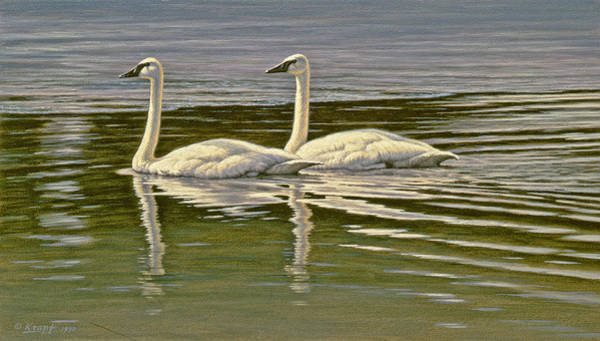 Wall Art - Painting - First Open Water - Trumpeters by Paul Krapf