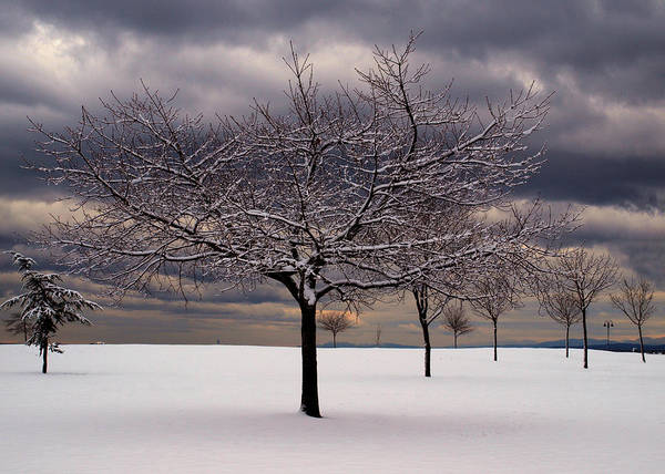 Photograph - First Snow 2010 by Randy Hall
