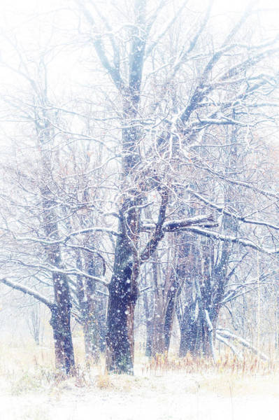 First Snow. Dreamy Wonderland Art Print