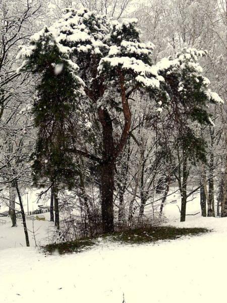Gorecki Photograph - First Snow by Henryk Gorecki