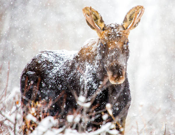 Photograph - First Snow  by Kevin  Dietrich
